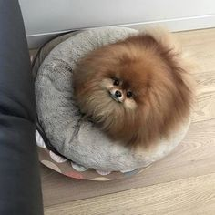 Ball of Pom fuzz