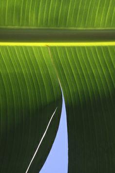 Brian Leighton Photography | Tropics