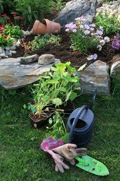 Amazing Flowers, Garden Hose, Planting, Scenery, Gardens, Urban, Bird, Outdoor Decor, Plants