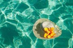shell dream