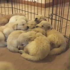 Source by dog dog memes dog videos videos wallpaper dog memes dog quotes dogs dogs pictures dogs videos puppies puppy video Cute Funny Animals, Cute Baby Animals, Funny Dogs, Animals And Pets, Funny Puppies, Fluffy Animals, Cute Baby Dogs, Cute Dogs And Puppies, Cute Babies
