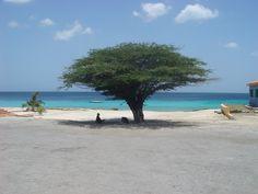 Dushi Korsou!! (Curacao)