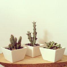 Cactil Cactus Land  Bogotá, Colombia