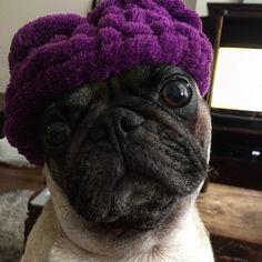 i love pugs Pug Pictures, Pug Pics, Pug Breed, Cute Pugs, Thug Life, Girls Best Friend, Dog Love, French Bulldog, Boston Terriers