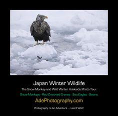 Japan Snow Monkey & Wild Winter Hokkaido Photo Tour - 2018