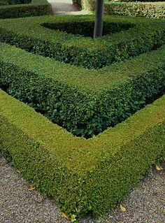 Three hedge edge