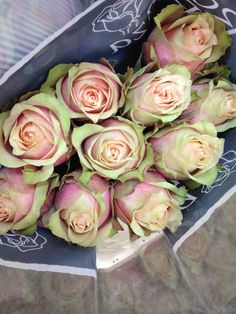 Rose 'secret love' pinky outside and peachy inside! Sold in bunches of 20 stems from the Flowermonger the wholesale floral home delivery service.