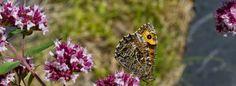 FINNISH NATURE. Garden, Animals, Insects....Researce. Give INFO. laji.fi puoli7.fi