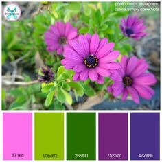 Purple Daisy Color Palette - free printout on CraftCoalition.com
