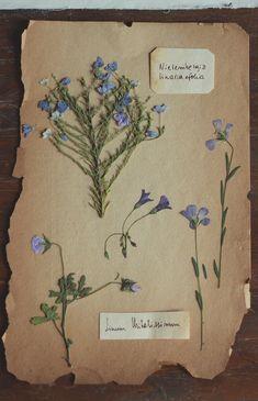 La Vida en las Montañitas : Colecciones Naturaleza ✿ (segunda parte)