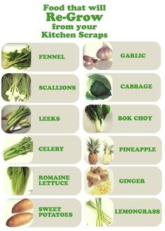 regrow celery from stump - Google Search
