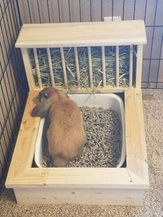 In the event you are looking for a furry companion that is not only extremely cute but simple to have then look no further than a pet bunny. Rabbit Litter Box, Rabbit Run, House Rabbit, Pet Rabbit, Rabbit Toys, Litter Box Training Rabbits, Pet Bunny Rabbits, Diy Bunny Cage, Bunny Cages