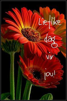 Lekker Dag, Goeie More, Afrikaans, Good Morning Quotes, Friendship, Prayers, Passion, Inspirational, Flowers