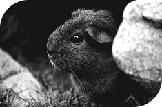 animal cute grass 47348   BW    boudoir #photography near me,  #photography knowledge for beginners,  photography school sheffield,  photography with iphone 8 plus colors,  marion brenner photography 9460722,  photography accessories near me bank,  baby photography props hire,