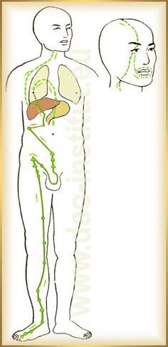 Dráha pečene - priebeh, funkcie a poruchy Chinese Medicine, Health, Epilepsy, Health Care, Salud