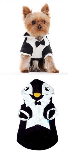 1000 images about d guisement pour animaux sur on pinterest pirates - Deguisement halloween chien ...