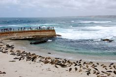 You have a great aerial view of the seals!!! | Community Post: Have You Ever Heard Of Seal Beach?! at la jolla