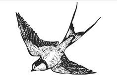 antique ink drawing of a barn swallow #tattoo  #body_art #bird #swallow body-art
