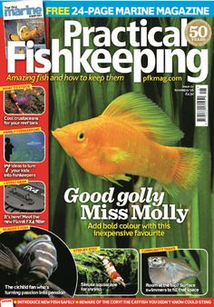 In this Issue:    FREE! 24-page marine magazine!    Amazing fish and how to keep them    Good Golly Mill Molly - add bold colour with this inexpensive favourite    What to stock? Cool crustaceans for your reef tank    Family Fishkeeping - 7 ideas to turn your kids into fishkeepers    Latest gear - it's here! Meet the new Fluval FX4 filter    Reader's fish - the cichlid fan who's turning passion into pension    Step-by-step - simply aquascape for shrimp    Community tanks - room at the top?…
