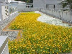 The Evergreen State College Extensive Greenroofs