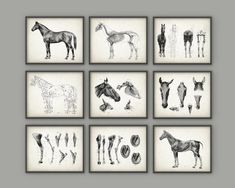 Horse Anatomy Posters Set of 9 - Horse Illustration Prints - Veterinary Horse Anatomy Charts - Equine Skeletal Anatomy - Horseriding Gift