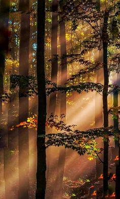 28 Amazing Sunset Forest Photography Ideas At Night Orange Beautiful World, Beautiful Places, Beautiful Pictures, Landscape Photography, Nature Photography, Photography Ideas, Portrait Photography, Wedding Photography, Nature Pictures