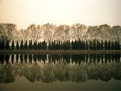 <p>Photo: Reflections of trees on lake</p>