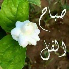 Morning Morning, Morning Wish, Morning Quotes, Emoji Love, Good Morning Greetings, Beautiful Morning, Morning Images, Christmas Ornaments, Holiday Decor