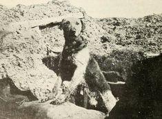 En medio de la masacre que supuso la Primera Guerra Mundial, la labor de los animales en la contienda tuvo varios papeles, desde ser mensajeros hasta portadores de artillería pesada.   Alguno