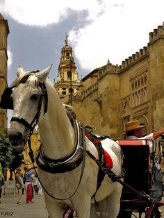 Cordoba,Spain