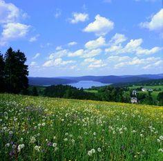 Erzgebirge-Vogtland Ridge Trail. Link zu Touren in der Gegend: http://www.outdooractive.com/de/touren/#lng=12.28779928261725=50.468662724320964=11=alpstein_map==0.10.0.10.0.10=lms=