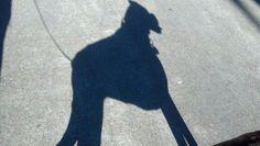 Kira's shadow