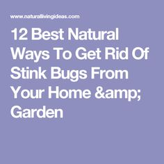 12 Best Natural Ways To Get Rid Of Stink Bugs From Your Home & Garden