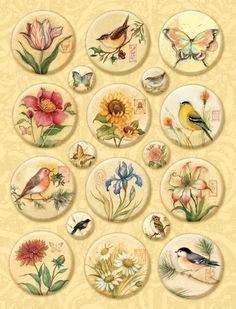 Amazon.com: K&Company Susan Winget Nature Icon Clearly Yours Embellishments