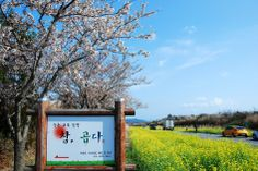 Noksanro Road in Jeju Island, Korea (March 30, 2014)