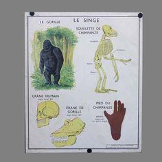 """Vintage Schultafel """"Tierische Anatomie"""". Frankreich 1950 - 1955."""