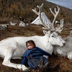 The Reindeer People of Mongolia
