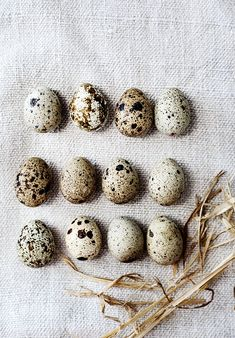 Eggs /