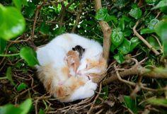 Teneri cuccioli Notizie: In Irlanda un nido di uccelli su un albero accogli...