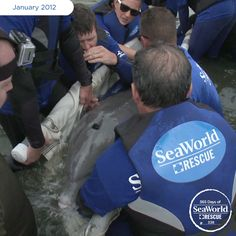 A concerned citizen saw this male bottlenose dolphin tangled in fishing line and called experts for assistance. SeaWorld and other organizations came to the rescue and disentangled the dolphin's fluke (or tail), made sure he was in good health and sent him on his way. #365DaysOfRescue
