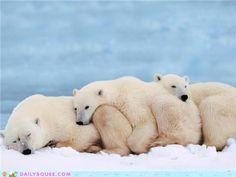 All aboard the polar not-so-express!