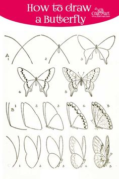 Learn how to draw a butterfly step by step using a few different methods. Make butterfly drawing fun and learn a few interesting facts in the process!