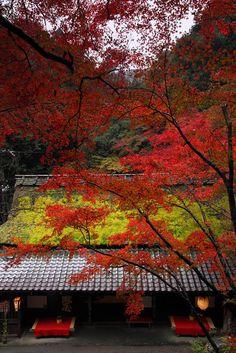 Japanese Landscape, Japanese Architecture, Okinawa, Nagoya, Yokohama, Beautiful World, Beautiful Places, Style Japonais, Autumn Scenery