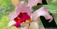 Vallarta Botanical Gardens. http://www.puertovallarta.net/what_to_do/vallarta-botanical-gardens.php #vallarta #botanical #puertovallarta #jalisco #mexico #travel