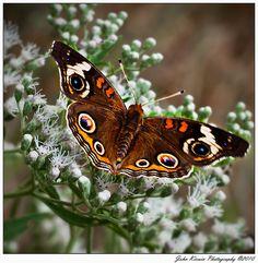 ~~Butterfly by kirwinj~~