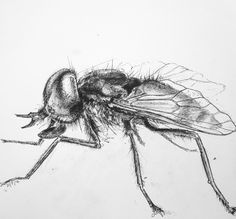 Horse fly....anyone who's been bitten by one will know the significance!!