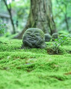 Jizo statue in the forest (Kyoto, Japan) - Garden Statue Kyoto Garden, Japan Garden, Moss Garden, Garden Art, Zen Garden Design, Garden Plants, Jizo Statue, Disney Garden Statues, Easter Island Statues