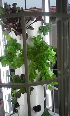 Things Beginning To Grow On My Tower Garden. So Exciting! Tower GardenJuice  PlusTo ...