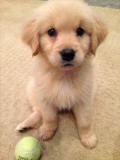 Cute Golden puppy, Kayak