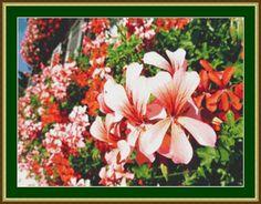Beautiful Geraniums Cross Stitch Pattern